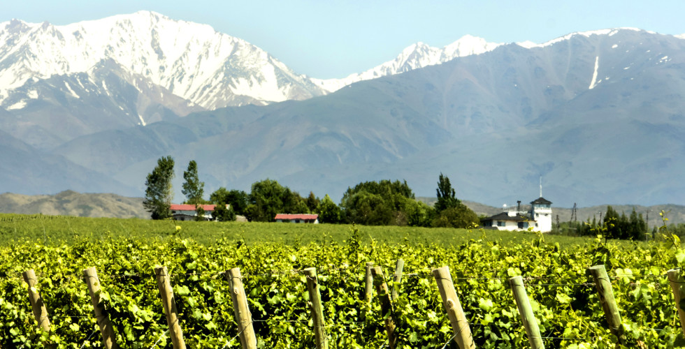 Weinregion Mendoza