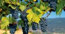 Vinoble Espagne du nord