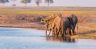 Elefanten am Chobe-Fluss