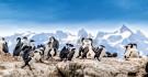 Kormorane im Beagle-Kanal, Patagonien