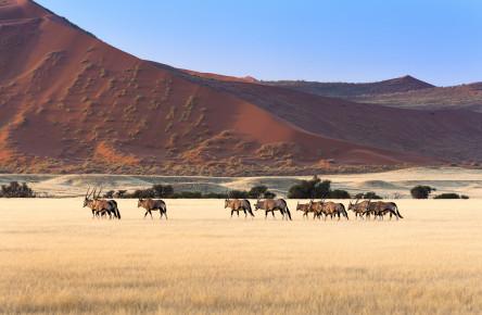 Wilderness Desert Dune Safari