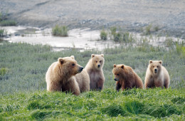 Great Alaska