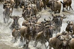 Tansania-Safari
