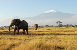 Kilimandscharo-Safari