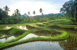 Abenteuer Bali
