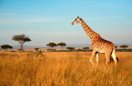 Kenia – Traumsafari und Meer