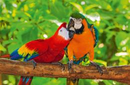 Costa Rica - Perla tropical