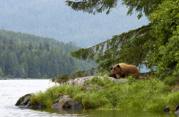 Nature et faune au Canada occidental