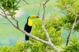 Costa Rica, «Pura Vida»