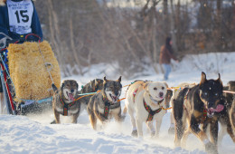 Yukon Quest Dog Sledding