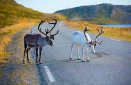 Magisches Lappland