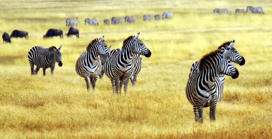 Image 2 - L'Afrique du Sud, la nature à fleur de peau