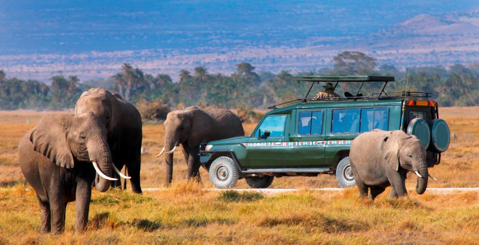 Bild 4 - Südafrika - Naturzauber hautnah