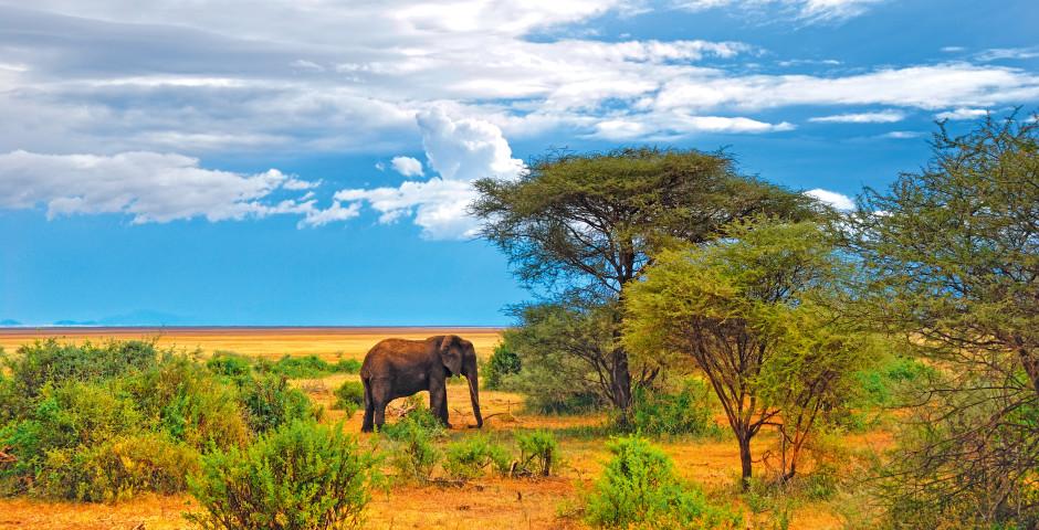 Image 5 - L'Afrique du Sud, la nature à fleur de peau