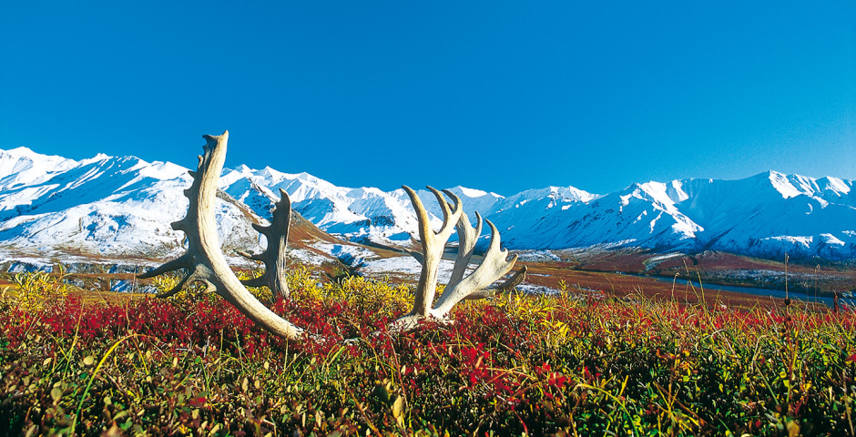 Bild 2 - Great Alaska