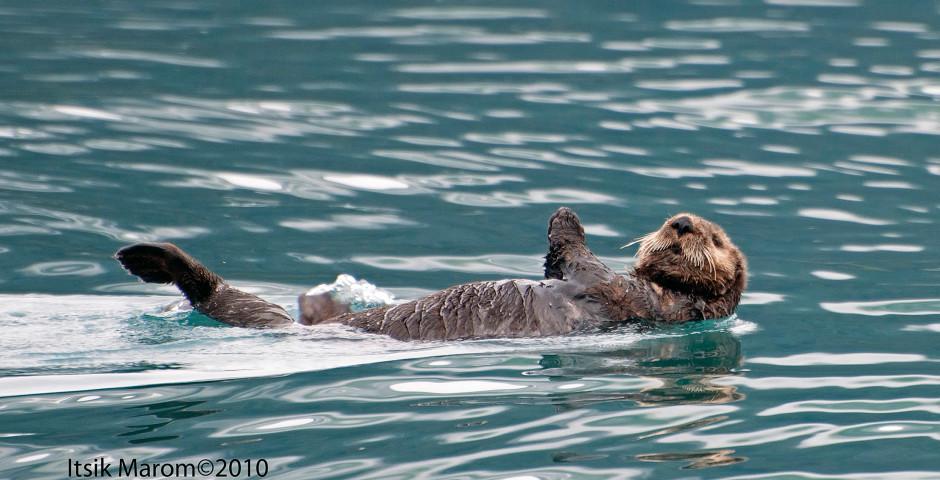 Image 7 - Alaska et Yukon, nature grandiose