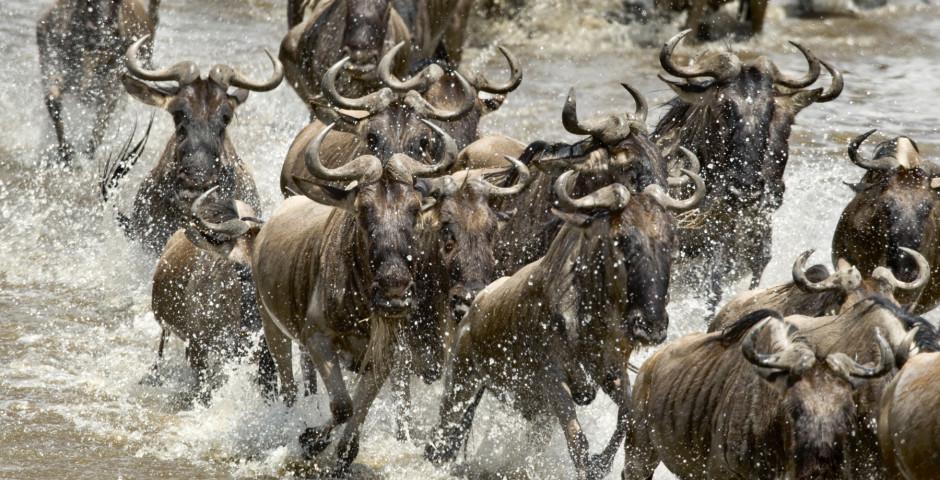 Image 1 - Safari en Tanzanie
