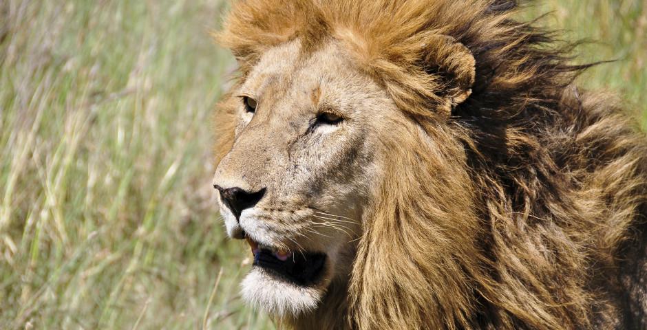 Image 2 - Safari en Tanzanie