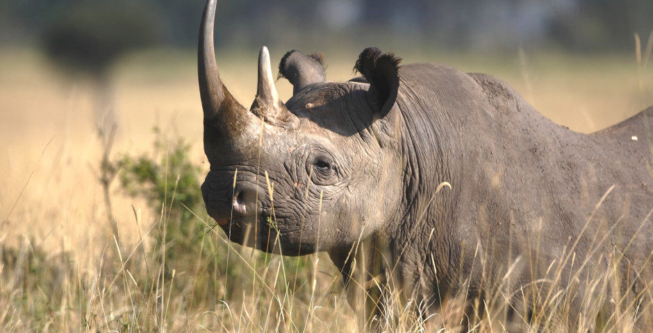 Image 3 - Safari en Tanzanie