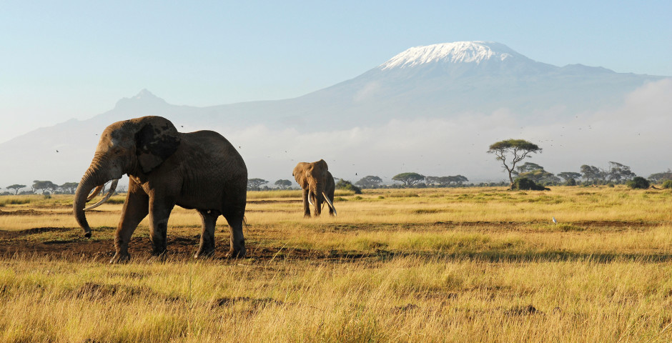 Bild 1 - Kilimandscharo-Safari