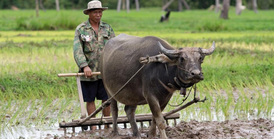 Bild 2 - Nordthailand-Rundreise