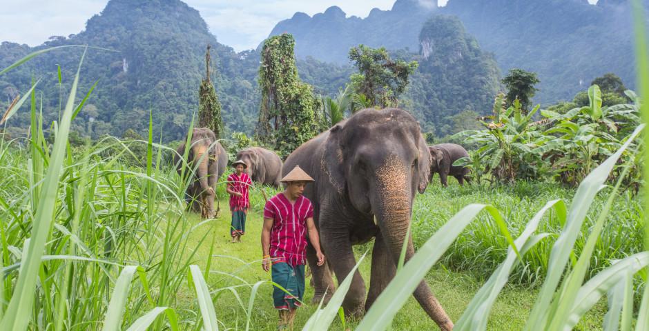 Bild 1 - Dschungelsafari