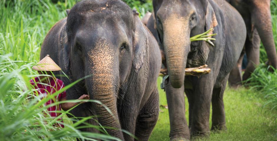Bild 8 - Dschungelsafari