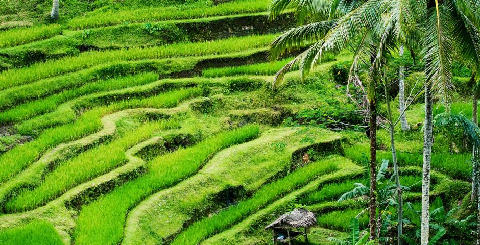 Image 2 - Charmante Bali
