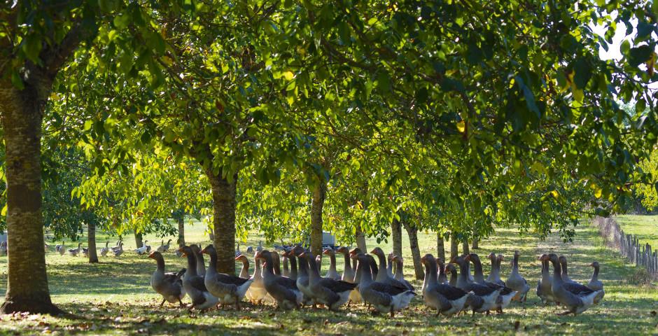 Image 11 - Bordeaux, Sarlat et vallée de la Dordogne
