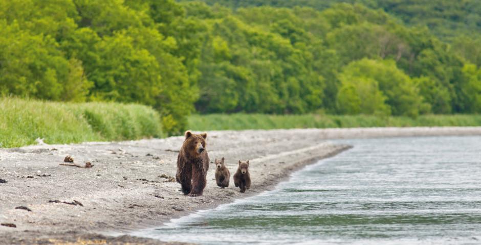 Image 2 - Kamtchatka – ours, geysers et volcans