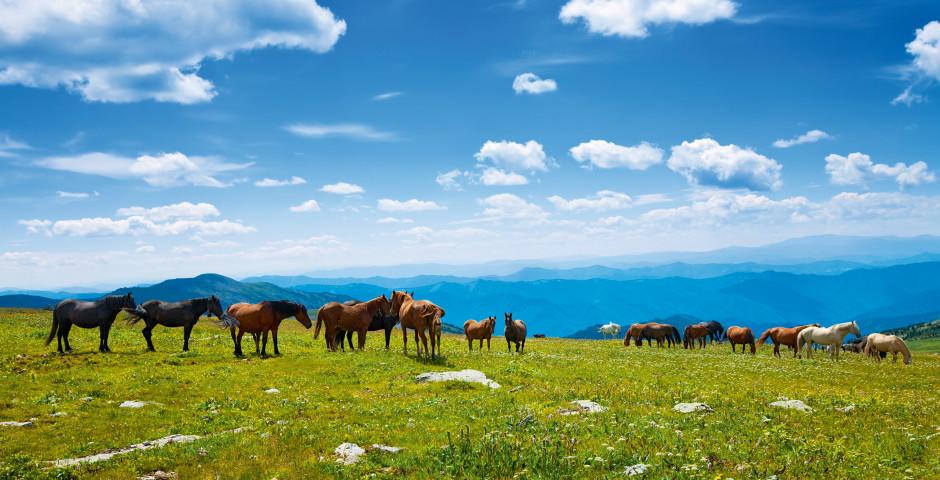 Bild 2 - Reiterlebnis in den sibirischen Wäldern