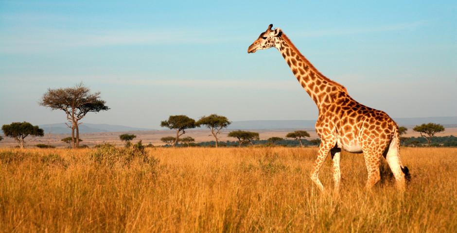 Image 1 - Kenya - safari de rêve et mer