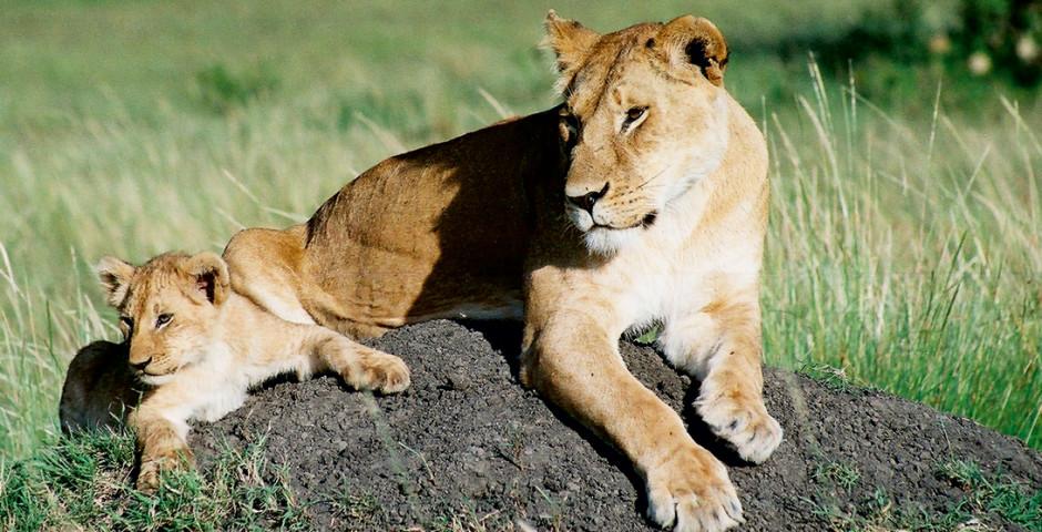 Image 2 - Kenya - safari de rêve et mer