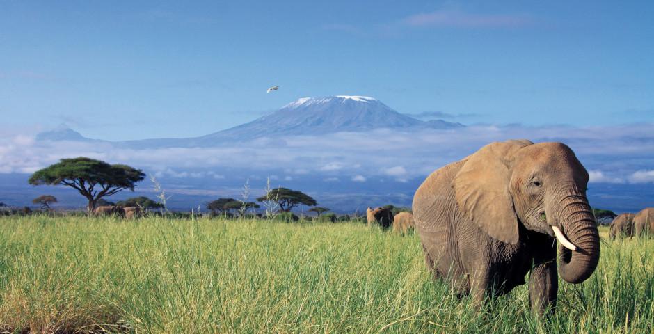 Image 7 - Kenya - safari de rêve et mer