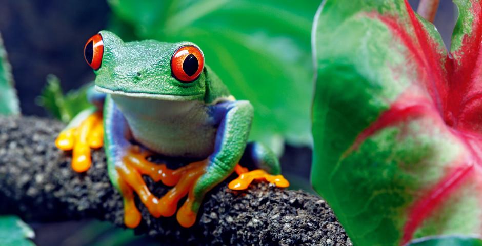 Image 4 - Le Costa Rica - la perle tropicale