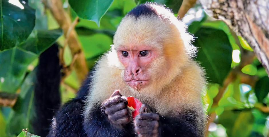 Image 3 - Le Costa Rica - la perle tropicale