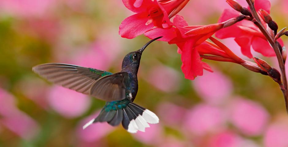 Image 5 - Le Costa Rica - la perle tropicale