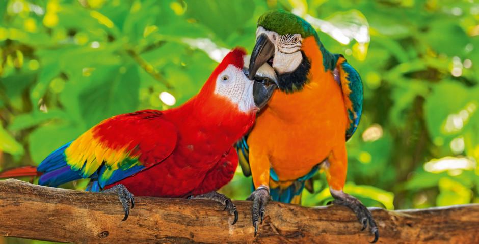 Image 1 - Le Costa Rica - la perle tropicale