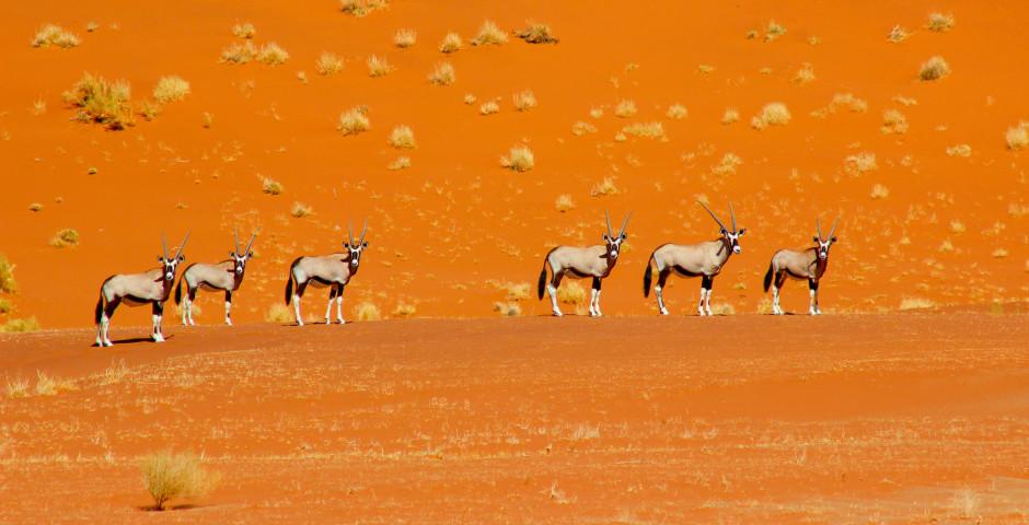 Image 4 - La Namibie, où la magie des déserts