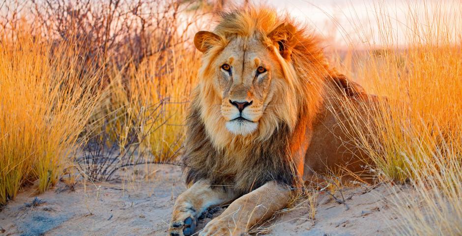 Image 2 - La Namibie, où la magie des déserts