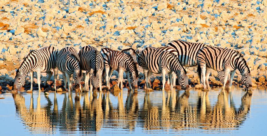 Image 5 - La Namibie, où la magie des déserts