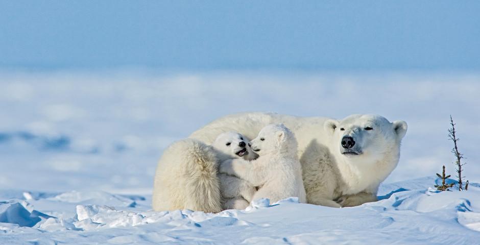 Bild 2 - Spitzbergen - Im Reich der Eisbären
