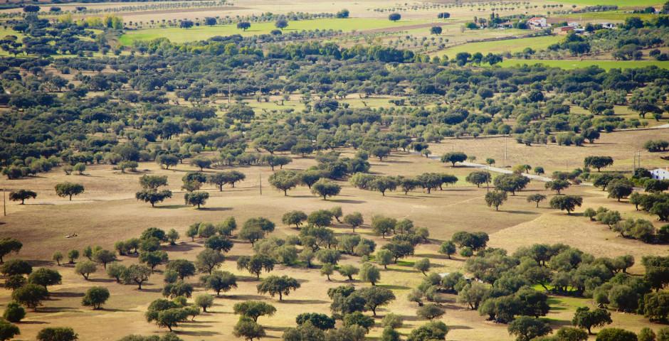 Image 5 - Le Sud du Portugal