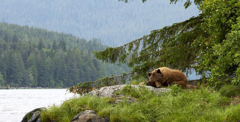 Bild 1 - Natur und Tiere Westkanadas