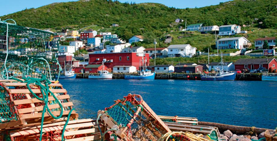 Bild 3 - Wild Labrador and Newfoundland