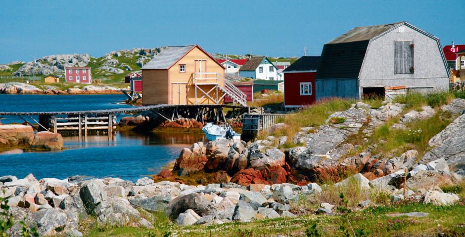 Bild 4 - Wild Labrador and Newfoundland