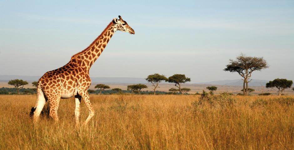 Bild 6 - Südafrika – Naturzauber hautnah