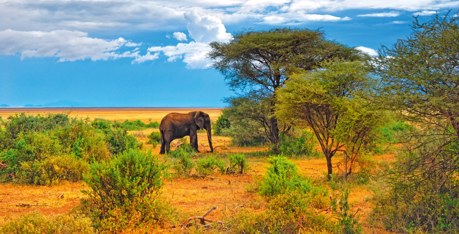 Bild 5 - Südafrika – Naturzauber hautnah