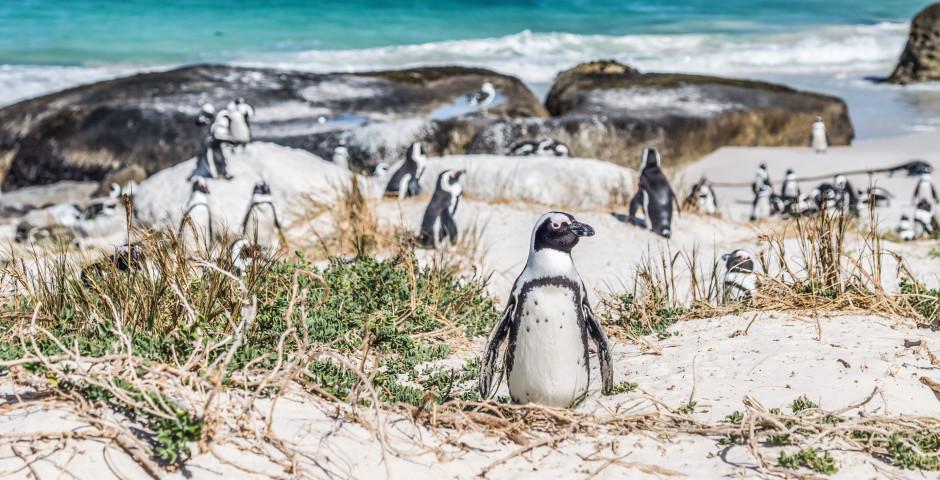 Bild 9 - Südafrika – Naturzauber hautnah