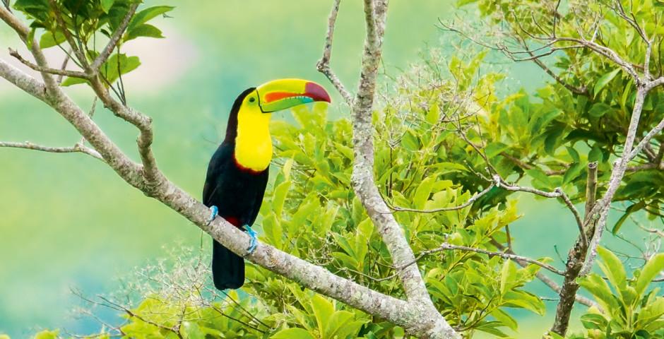 Bild 1 - Costa Rica – «Pura Vida»